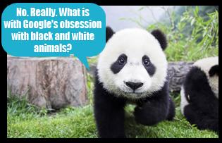 Google-Panda-Update-Meme